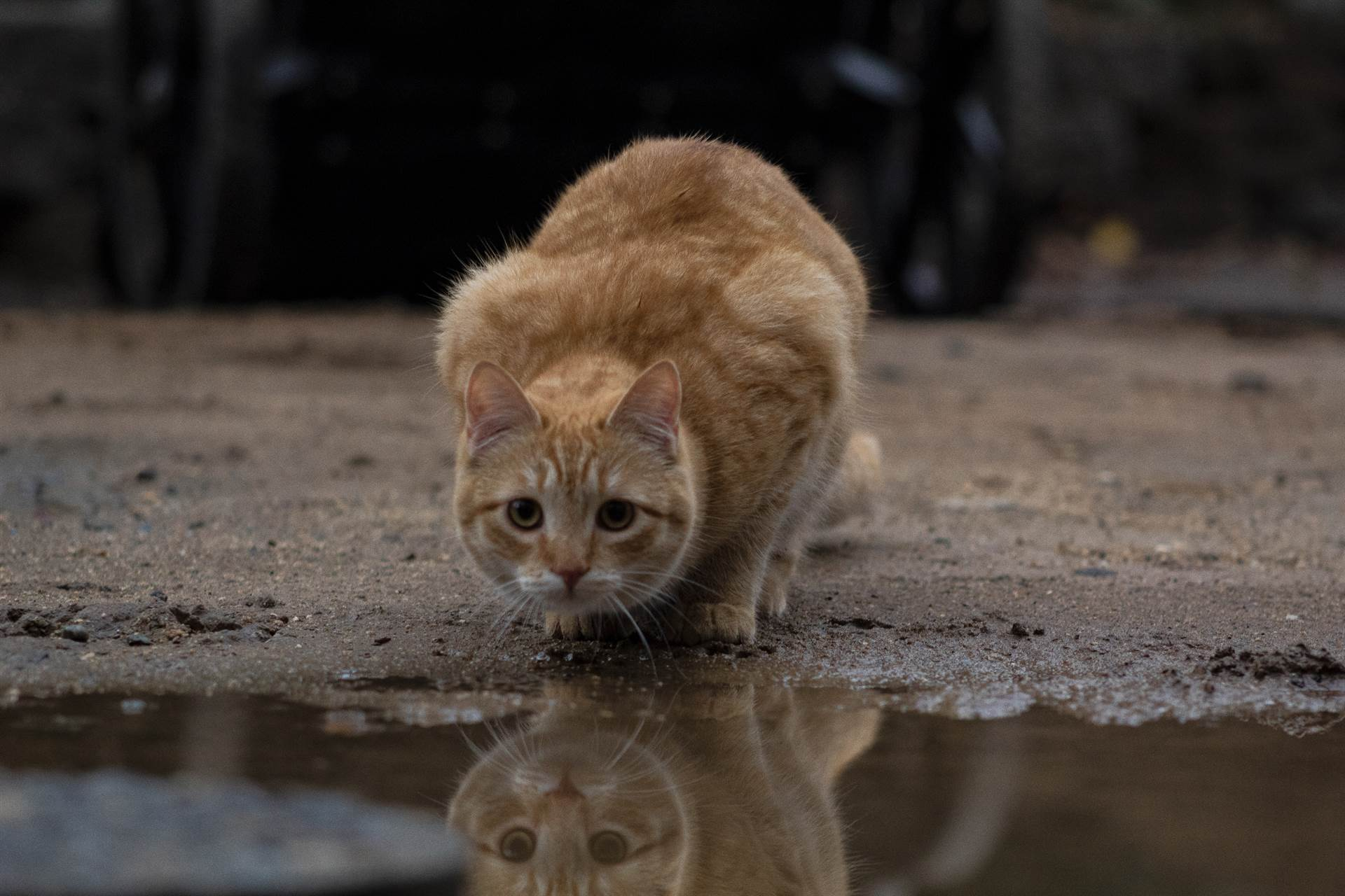 Photo of Cat with water reflection