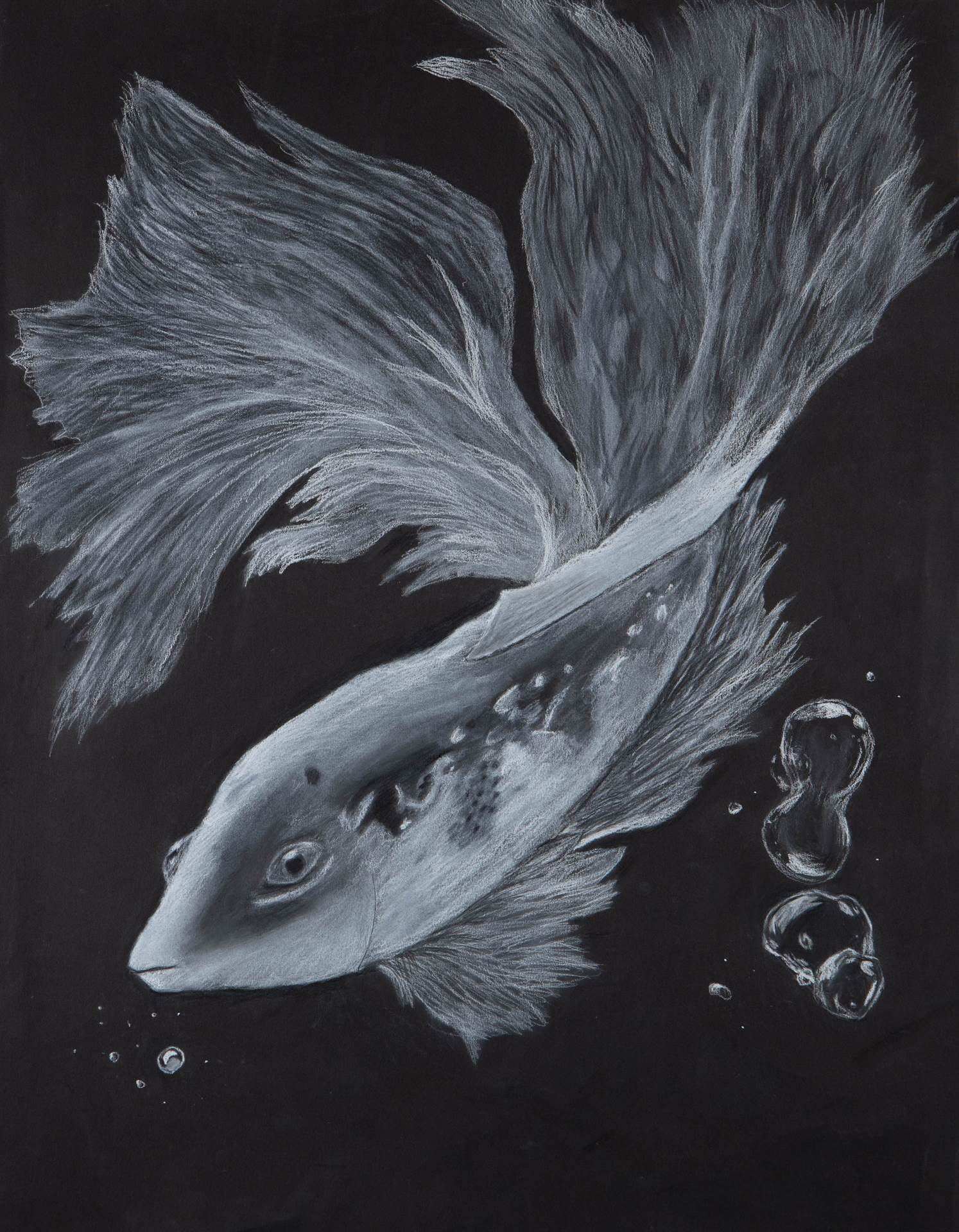 Drawing of koi fish